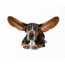 Средства для ушей