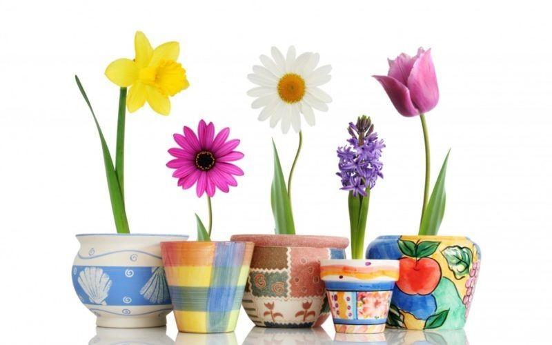 Горшки и кашпо для выращивания цветочных, декоративных и рассады овощных культур в городе Ульяновске. ЭкоФерма73.ру